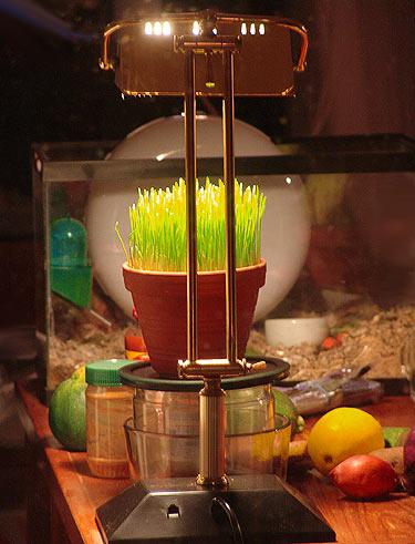 juicer fresh fruit and vegetable recipes